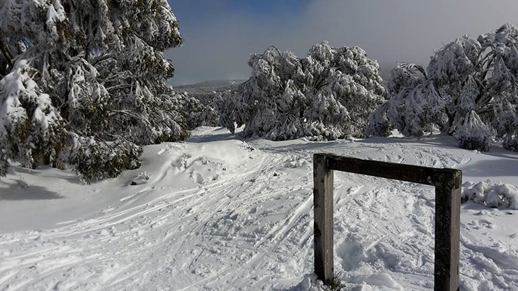 Image courtesy Mt St Gwinear